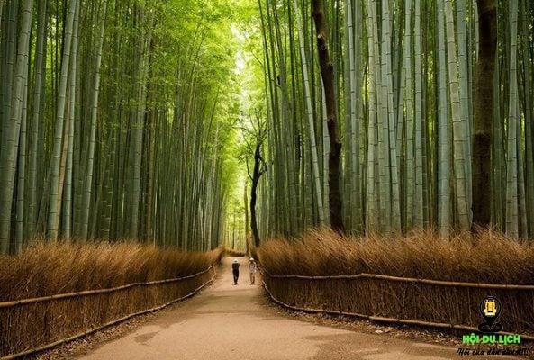 Con đường xuyên rừng trúc vô cùng đẹp (ảnh sưu tầm)