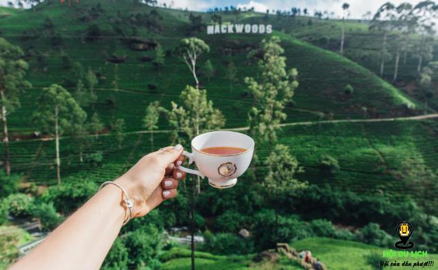 Ghé thăm công ty chè và thưởng thức trà ngon- ảnh sưu tầm