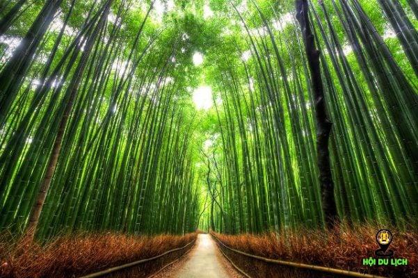 Khu rừng trúc Sagano đẹp độc đáo