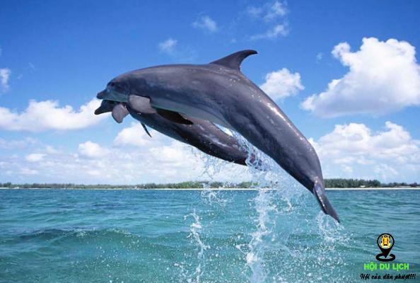 Màn trình diễn chú cá heo tinh nghịch- ảnh sưu tầm