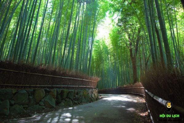 Mùa xuân rừng cây trúc lá xanh non mỡn khi xuân về (ảnh sưu tầm)