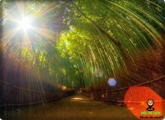 Mặt trời chiếu sáng tạo nên vẻ đẹp lung linh hơn cho rừng Sagano (ảnh sưu tầm)