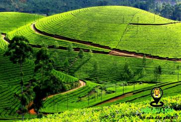 Top 5 điểm tham quan Nuwara Eliya đẹp nhấtở Sri Lanka
