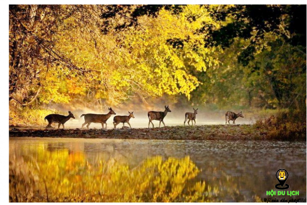 Phong cảnh mùa thu đẹp vô cùng của Rừng Đen- ảnh sưu tầm