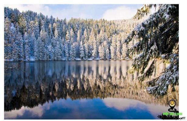 Rừng Đen khi mùa đông đến tuyết phủ trắng- ảnh sưu tầm