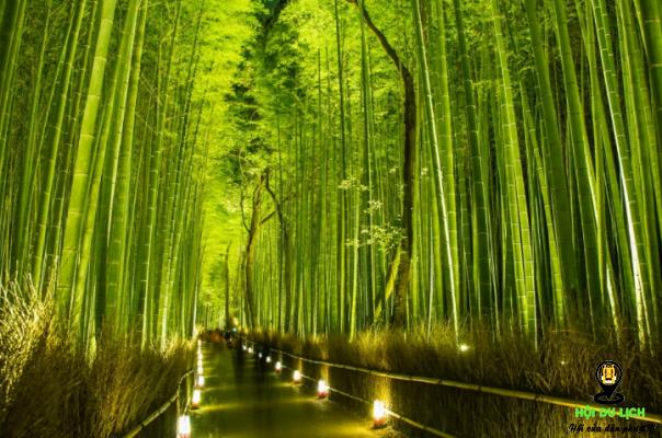 Vẻ đẹp mê hoặc của rừng trúc Sagano ở Nhật (ảnh sưu tầm)