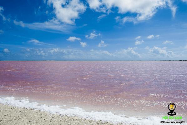 Sắc hồng độc đáo của Bãi biển Bonair