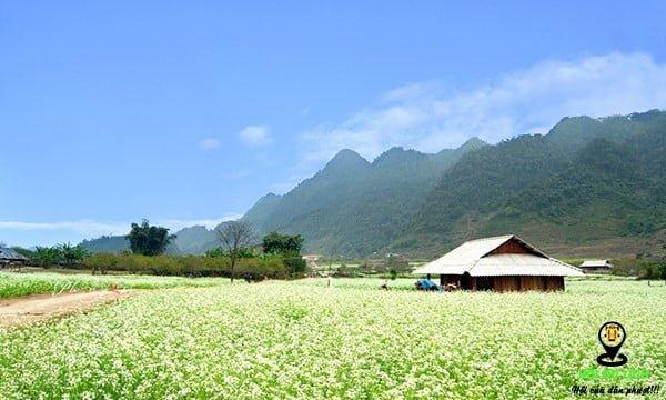 Bạn không nên bỏ qua những cánh đồng hoa cải trắng nở rộ Mộc Châu