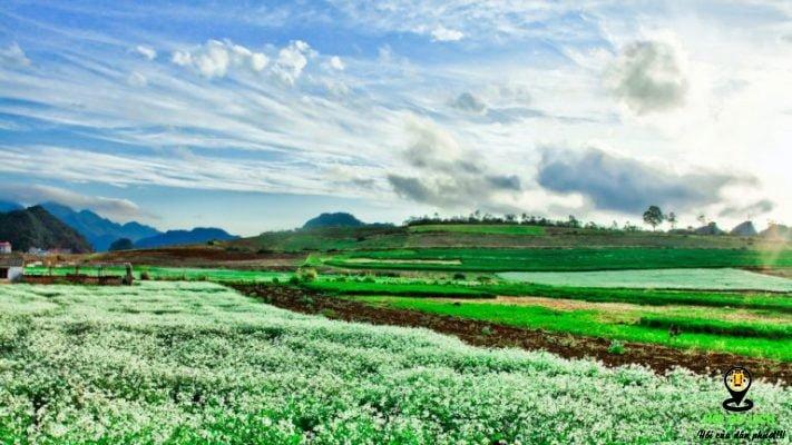 Các địa điểm ngắm hoa cải trắng tuyệt đẹp