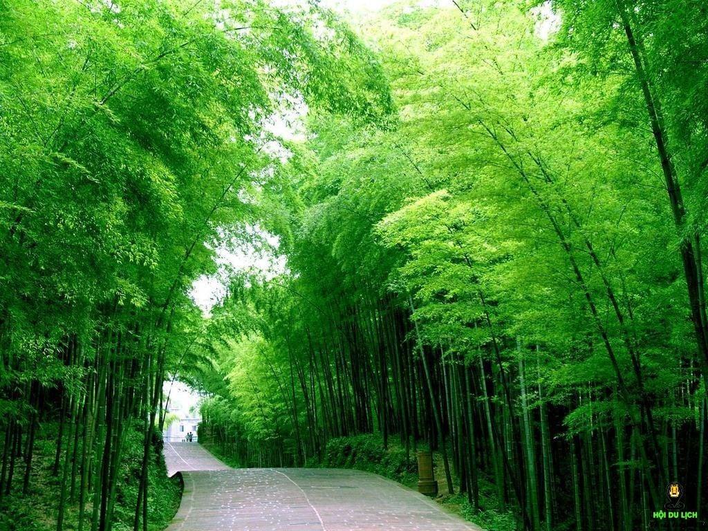 Không khí trong lành của vườn trúc Juknokwon