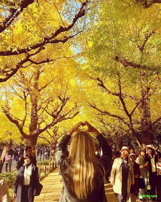 Đường cây ngân hạnh (Nhật Bản)