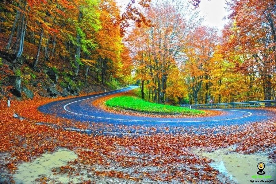 Công viên Quốc gia Rừng Casentino