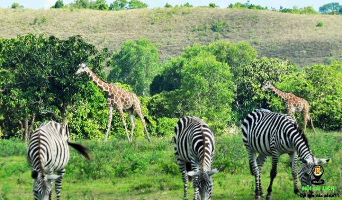 Có nhiều loài động vật trong khu vườn- ảnh sưu tầm