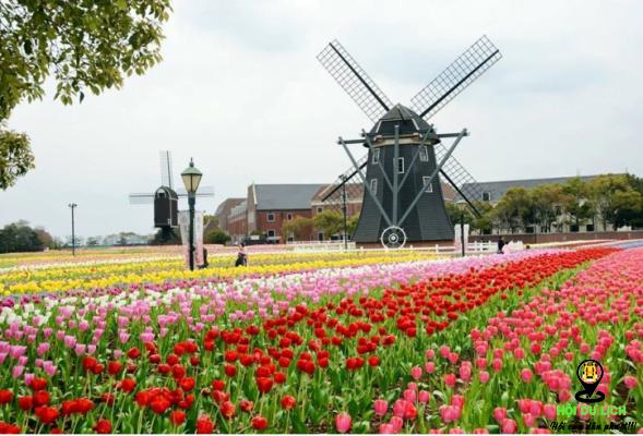 Công viên Huis Ten Bosch điểm tham quan hấp dẫn tại Nhật Bản (ảnh sưu tầm)