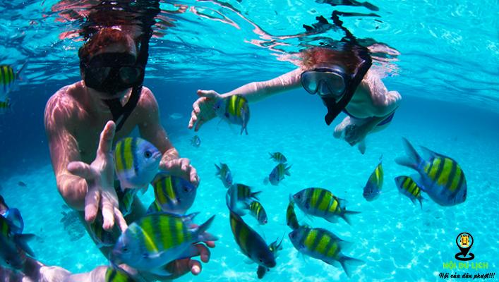 Lặn biển ở đảo Phi Phi (ảnh sưu tầm)