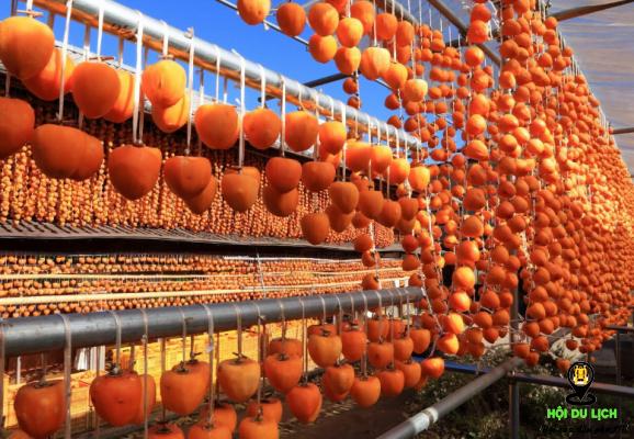 Lễ hội hái trái cây ở Nhật (ảnh sưu tầm)