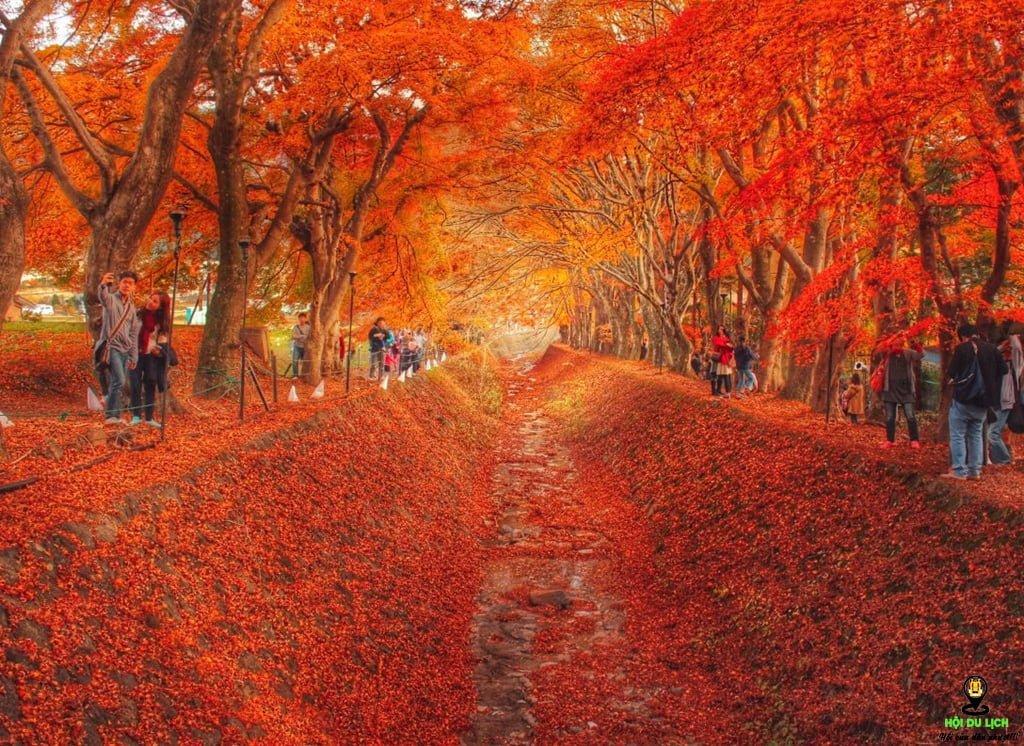 Đường cây phong (Nhật Bản)