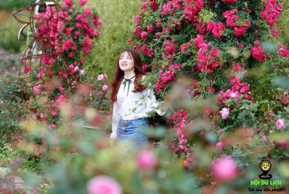 Thung lũng hoa hồn ở Sapa xinh đẹp (ảnh sưu tầm)