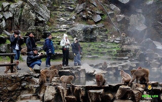 Công viên khỉ Jigoku Dani - Nhật Bản.