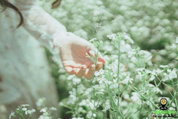 Hoa cải trắng Đà Lạt - nơi giúp bạn có những khung hình tuyệt đẹp