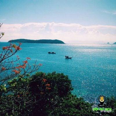 Hoa ngô đồng Cù Lao Chàm