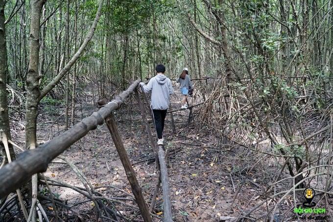 khám phá hệ sinh thái rừng ngập mặn