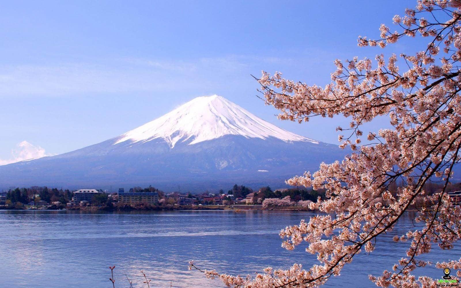 Tuyết phủ trắng quanh năm tại núi Phú Sỹ.