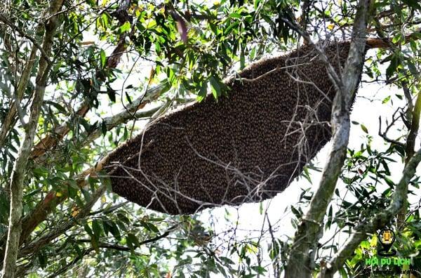 Mật ong tại Rừng Tràm Trà Sư