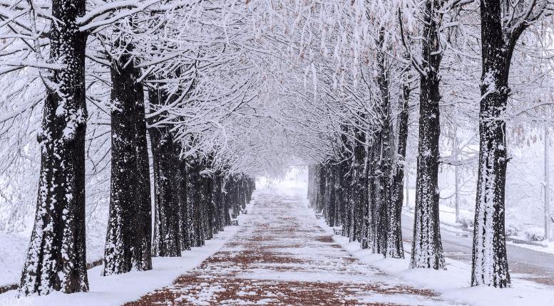 Đảo Nami tuyết bao phủ trắng xóa (ảnh sưu tầm)