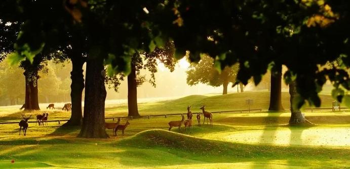 Cảnh đẹp thơ mộng như tranh vẽ ở công viên Wollaton (ảnh sưu tầm)
