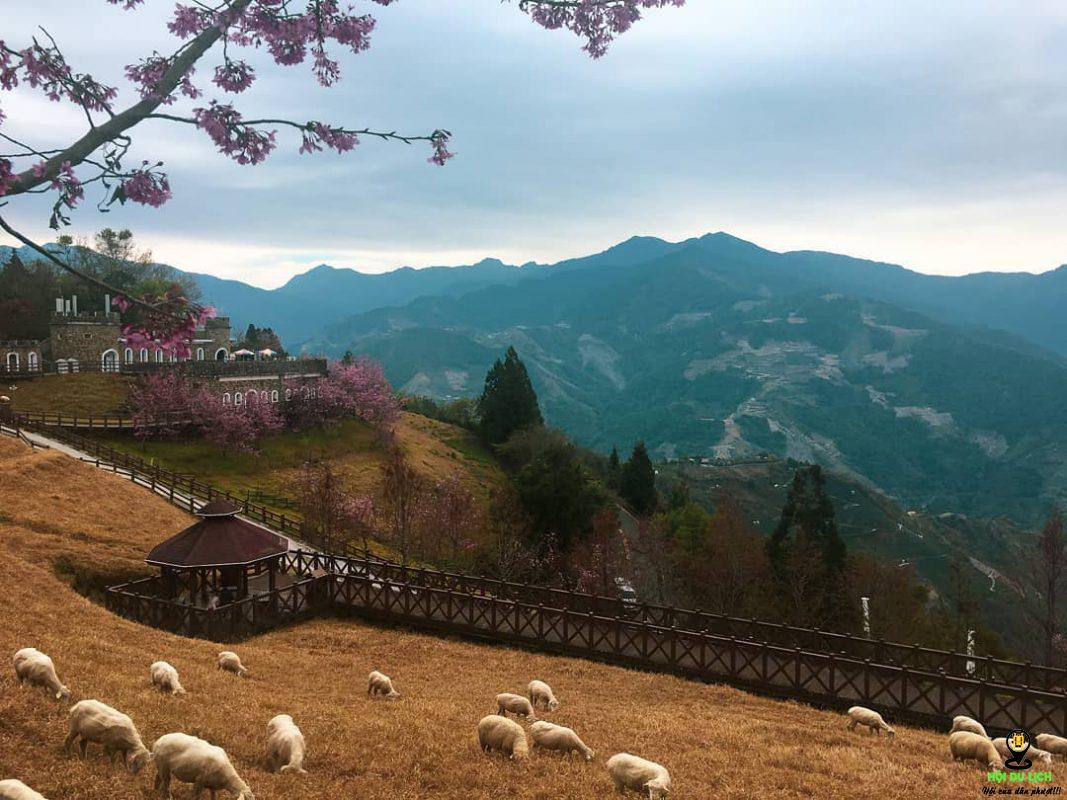 Du lịch Cingjing Farm
