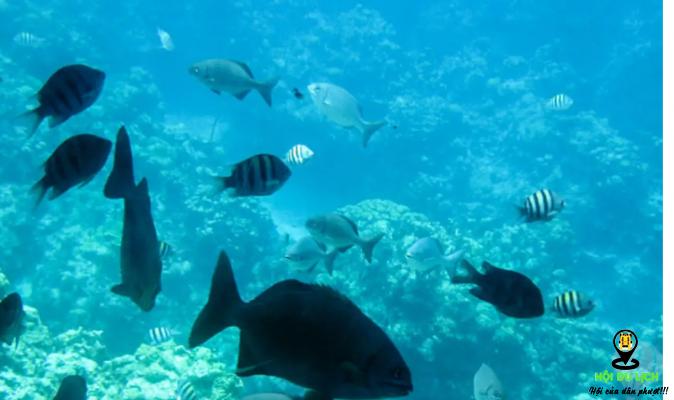 Ngắm cuộc sống dưới biển Mauritius (ảnh sưu tầm)