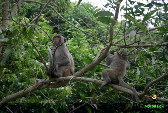 Những chú khỉ tinh nghịch ở vườn quốc gia Ba Vì (ảnh sưu tầm)