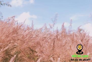 Kinh nghiệm du lịch Đà Lạt đón mùa cỏ hồng