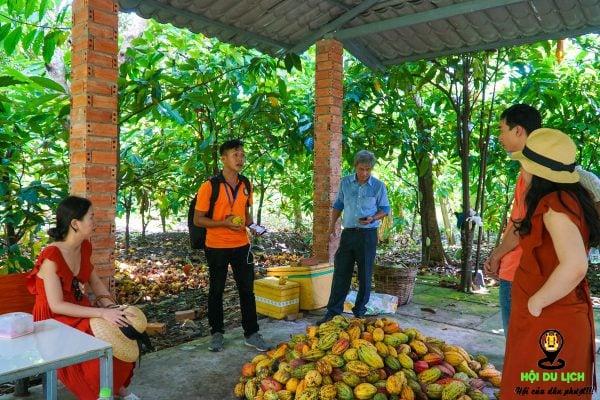 Về trưa, bạn có thể đến vườn cacao Mười Cương