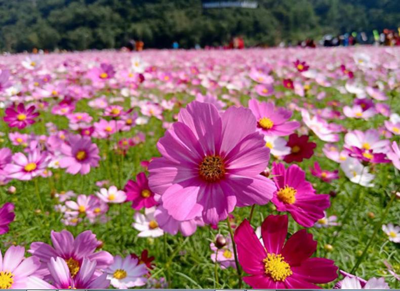 Bạt ngàn sắc hoa ở thung lũng Bắc Sơn (ảnh sưu tầm)