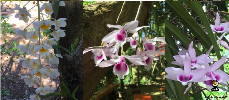 Chiêm ngưỡng hoa lan ở Troh Bư ( ảnh sưu tầm)