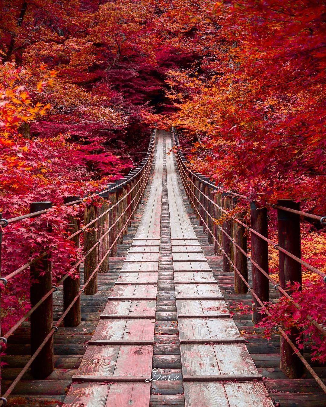 Ibaraki - Địa điểm du lịch lịch lý tưởng cho du khách yêu hoa