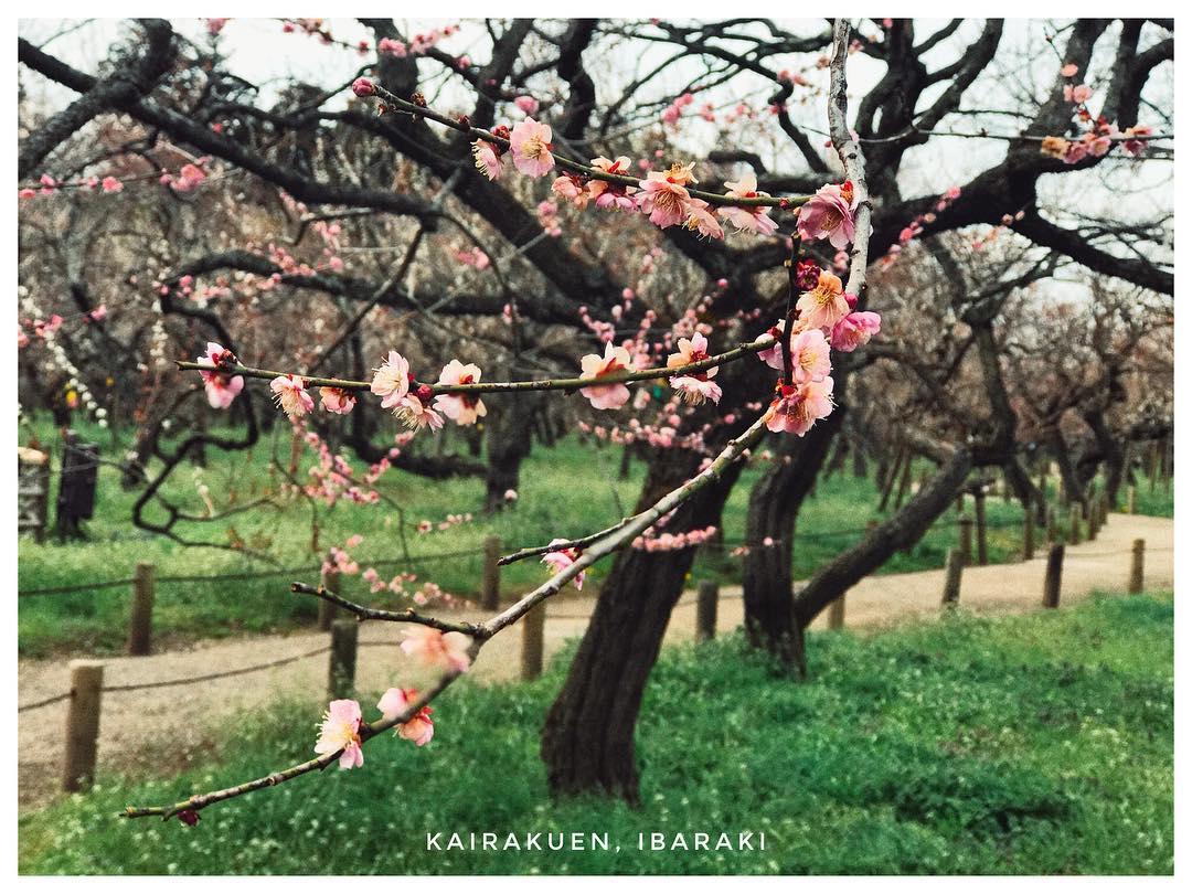 Vườn hoa Kairakuen
