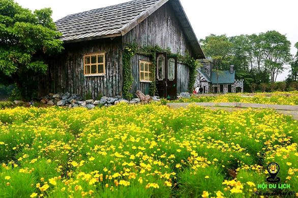 Không gian đẹp lãng mạn ở thảo nguyên hoa Long Biên (ảnh sưu tầm)