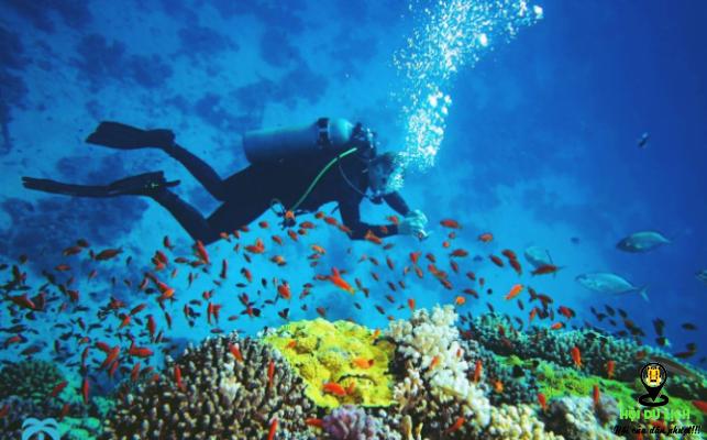 Lặn biển khám phá đại dương ở hòn Mun ( ảnh sưu tầm)