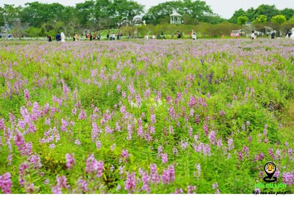 Thảo nguyên hoa Long Biên muôn sắc hoa ( ảnh sưu tầm)