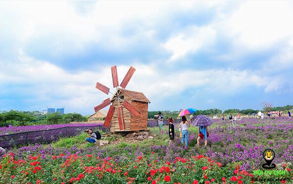Thảo nguyên hoa Long Biên đẹp quyến rũ (ảnh sưu tầm)