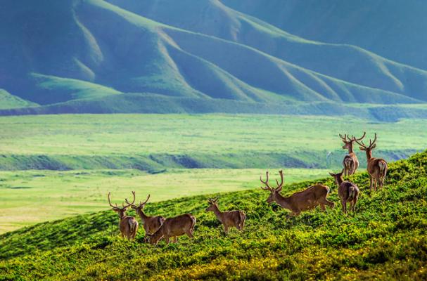Đồng cỏ trên núi Qilian (ảnh sưu tầm)