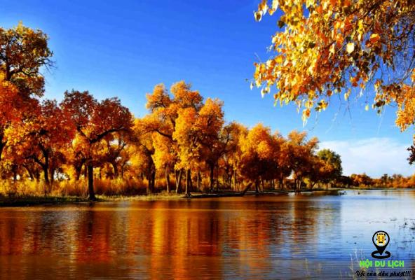 Cảnh đẹp như được rát vàng ở đồng cỏ Nalat ở thảo nguyên Yili (ảnh sưu tầm)