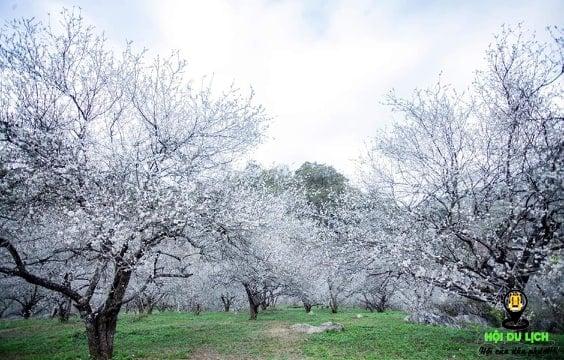 Hoa trắng nở khắp thung lũng ảnh sưu tầm)
