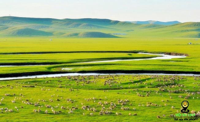 Thảo nguyên Hulun Buir với đồng cỏ rộng lớn (ảnh sưu tầm)