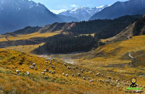 Thảo nguyên núi Qilian đẹp như tranh (ảnh sưu tầm)