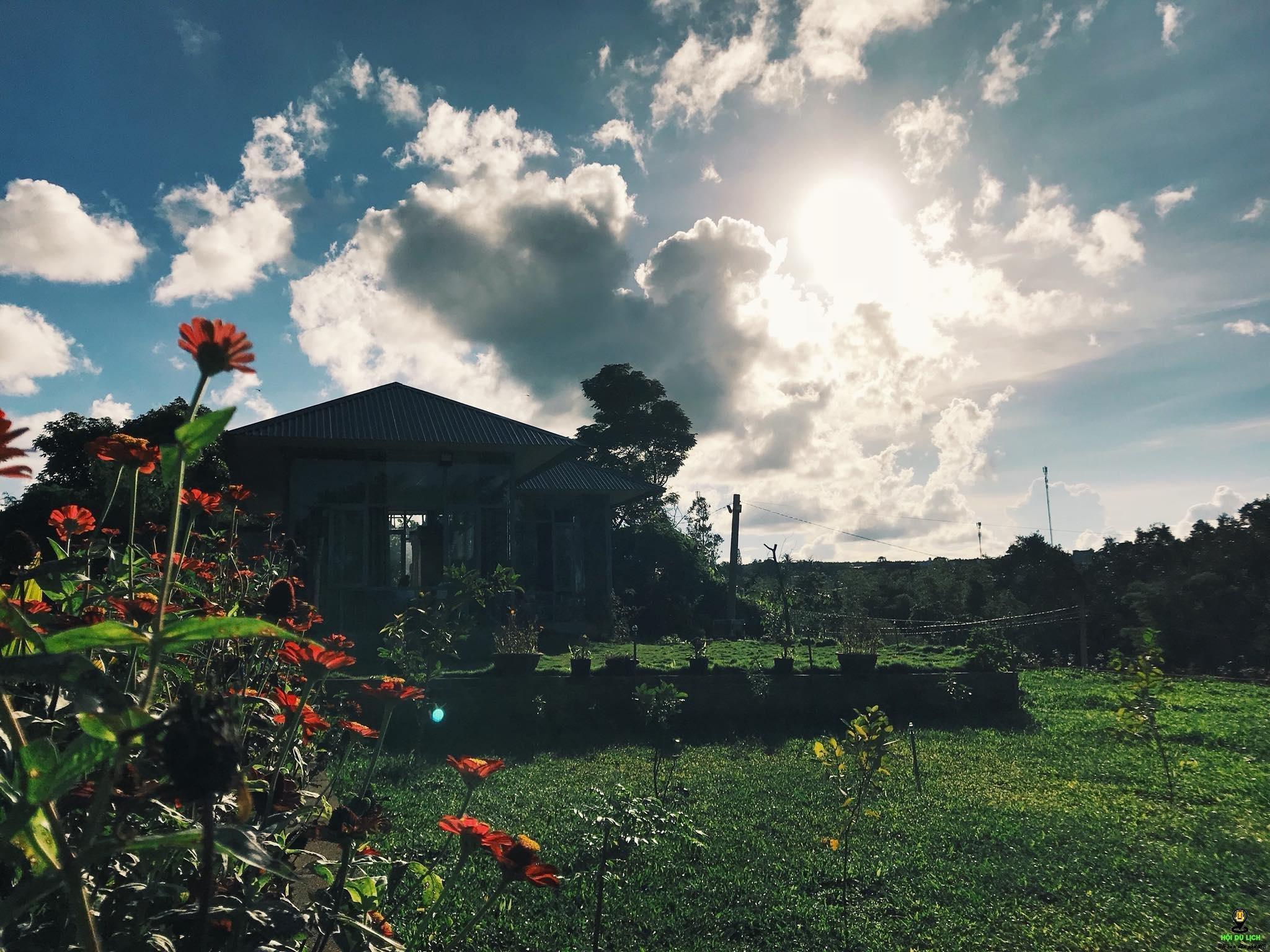 Trong hình ảnh có thể có: đám mây, bầu trời, thực vật, cây, cỏ, hoa, ngoài trời và thiên nhiên